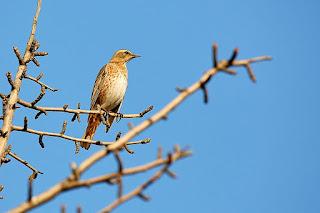 Bird on branch, Wikimedia Commons,  Mathew Schwartz