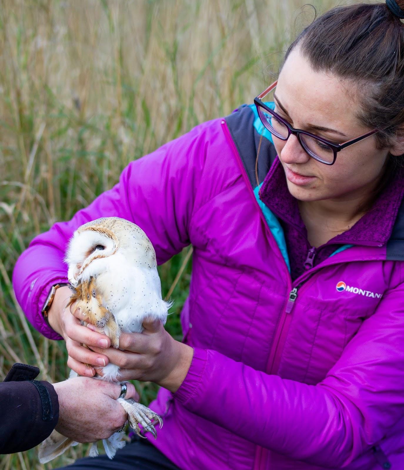 Sasha The Trainee With Barn Owl