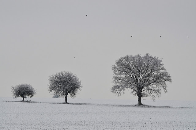 Arbres Neige Yonne Puisaye