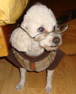 La Supraconciencia-tu-perro