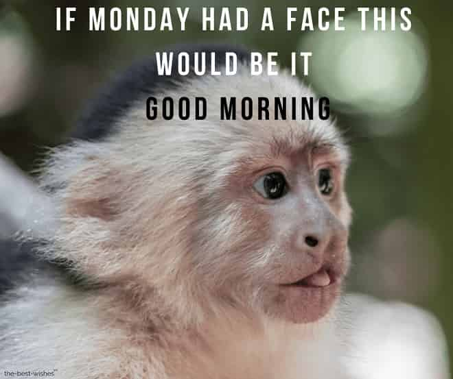 good morning monkey meme monday images