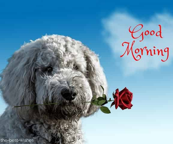 wishing you a day full of love and peace with dog having red rose