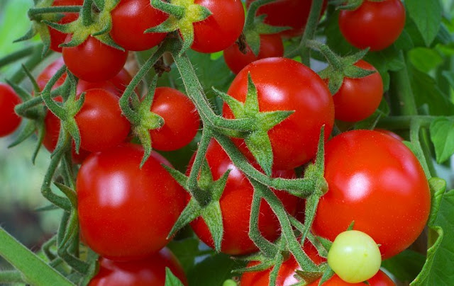 Manfaat Tomat, Selain Enak Dimakan Ternyata Bagus Untuk Perawatan Wajah
