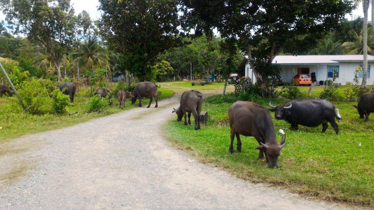 To Sawangan Beach Thru Coastal Road