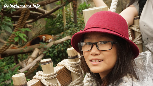 red panda at Ocean Park - travel with kids