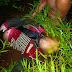 Ditemukan Mayat Di Duga Korban Pembunuhan Di Kebun SK 5 Jalan Kubu-PT.Jatim