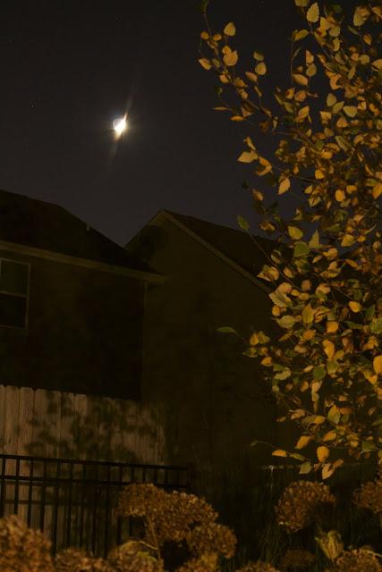 crescent moon in fall scene