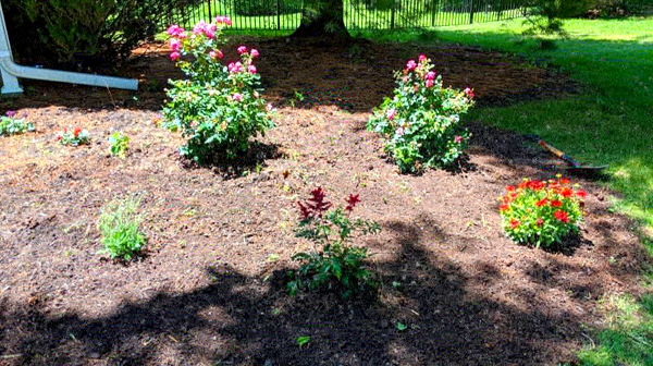 image of a small flower bed filled with newly planted things