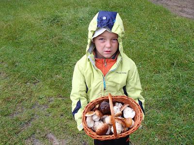 Grzyby na Orawie, grzyby w lipcu, wysyp borowików szalachetnych