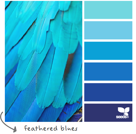 http://design-seeds.com/index.php/home/entry/feathered-blues