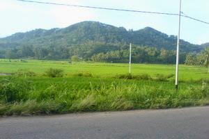 pemandangan,alam,pedesaan