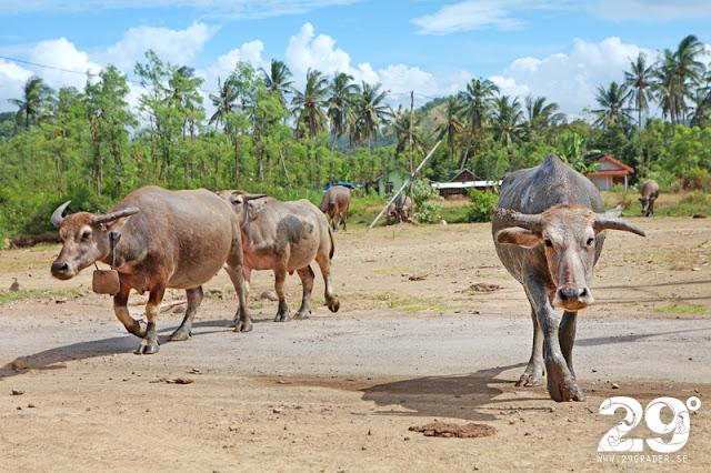 Ön Lombok - en oslipad diamant