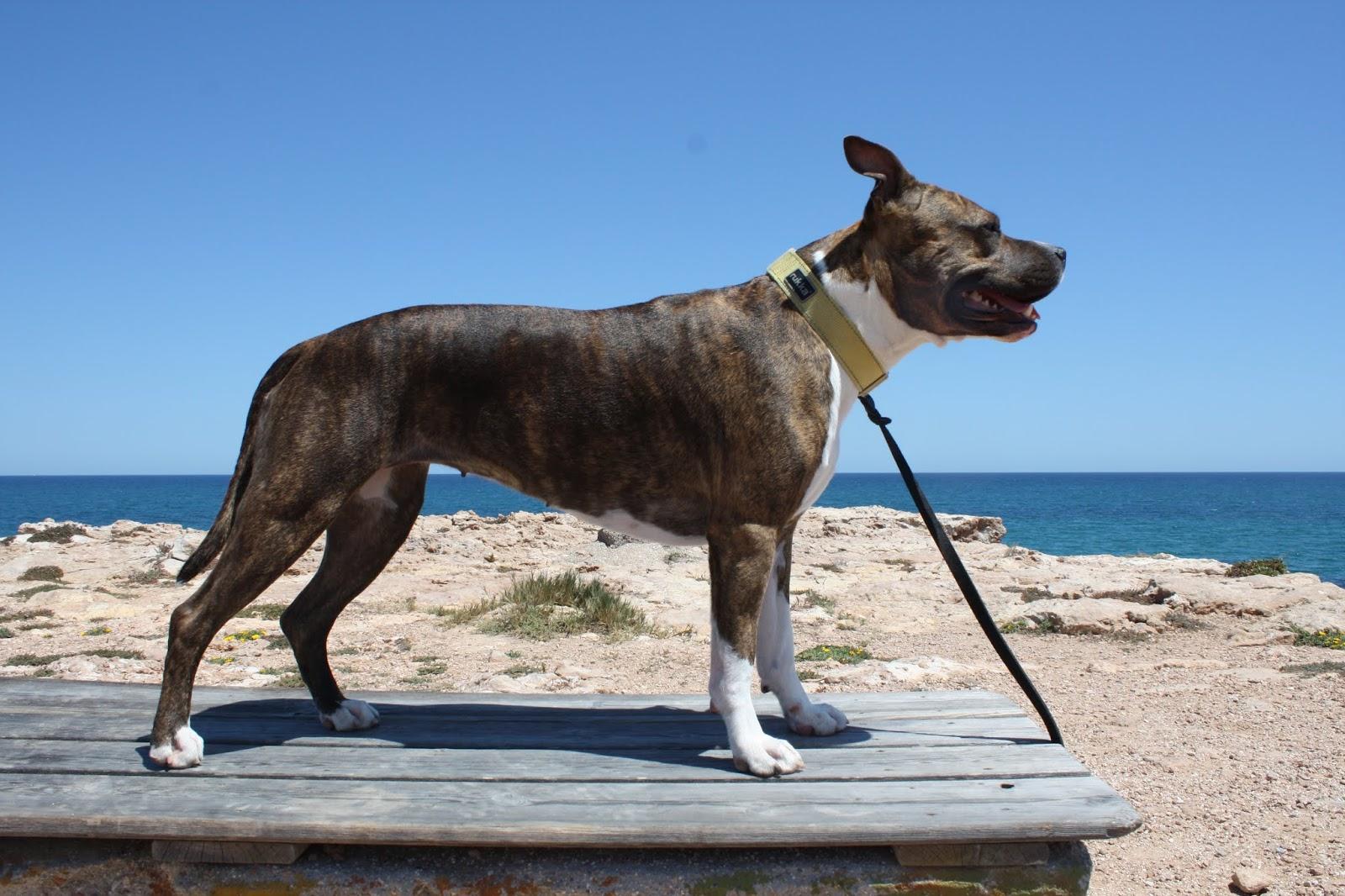 Koiran Sirun Rekisteröinti