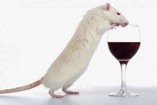 Alcohol gene in rats discovered