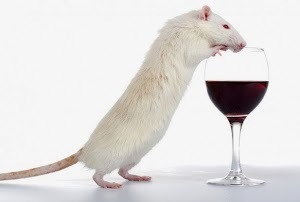 Gene responsible for alcohol preference in rats disovered !