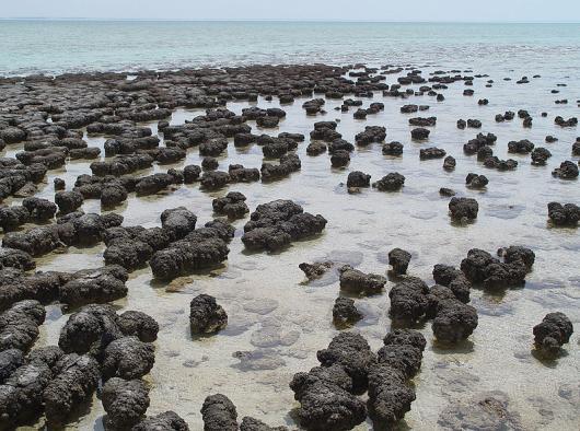 Estromatolitos-Australia