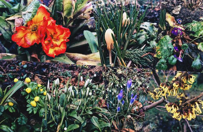 Der Balkon und Garten im Februar 2018