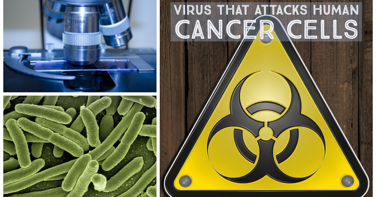 Researchers have Identified a Virus that Attacks Human Cancer Cells