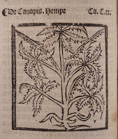 A printed woodcut illustration of a plant.