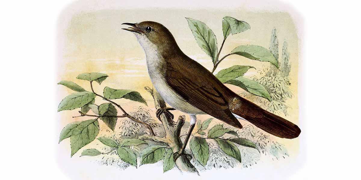 nightingale poem william wordsworth