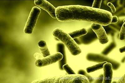Cara Mengatasi Penyakit Kolera Dengan Cepat dan Tepat