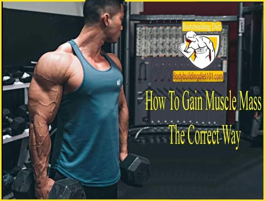 How To Gain Muscle Mass The Correct Way