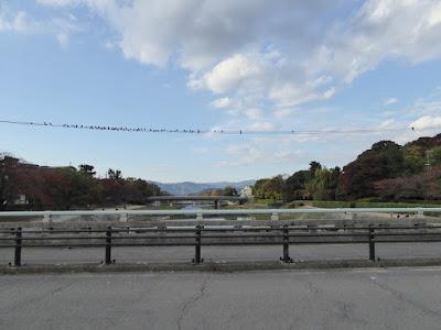 京阪出町柳駅周辺の加茂川