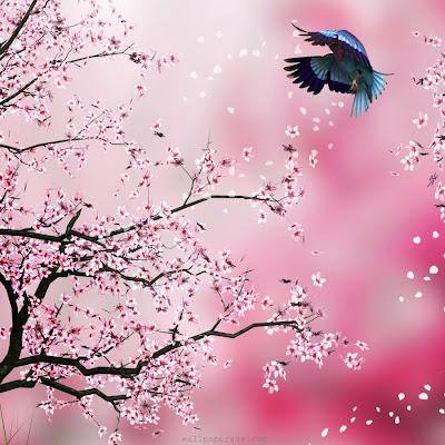 Unduh 45 Gambar Bunga Sakura Untuk Garskin Paling Cantik