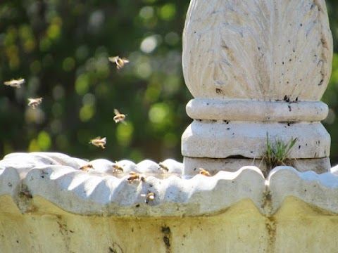 Flight of the Bumblebees