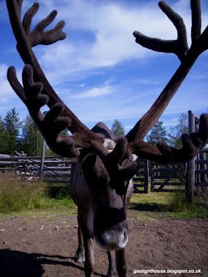 gaslighthouse.blogspot.com Arctic Circle Santa Claus Village Rovaniemi Finnish Lapland reindeer