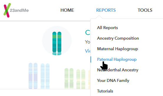 23andMe Y-DNA SNP testing