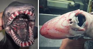 Ρώσος ψαράς ανεβάζει φωτογραφίες ψαριών που ζουν πολύ βαθιά στο βυθό