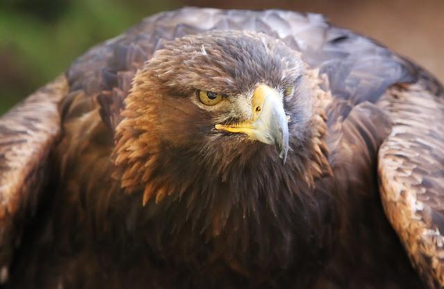 9 Burung Termahal di Dunia, Bahkan Ada yang Seharga Rp 90 Miliar