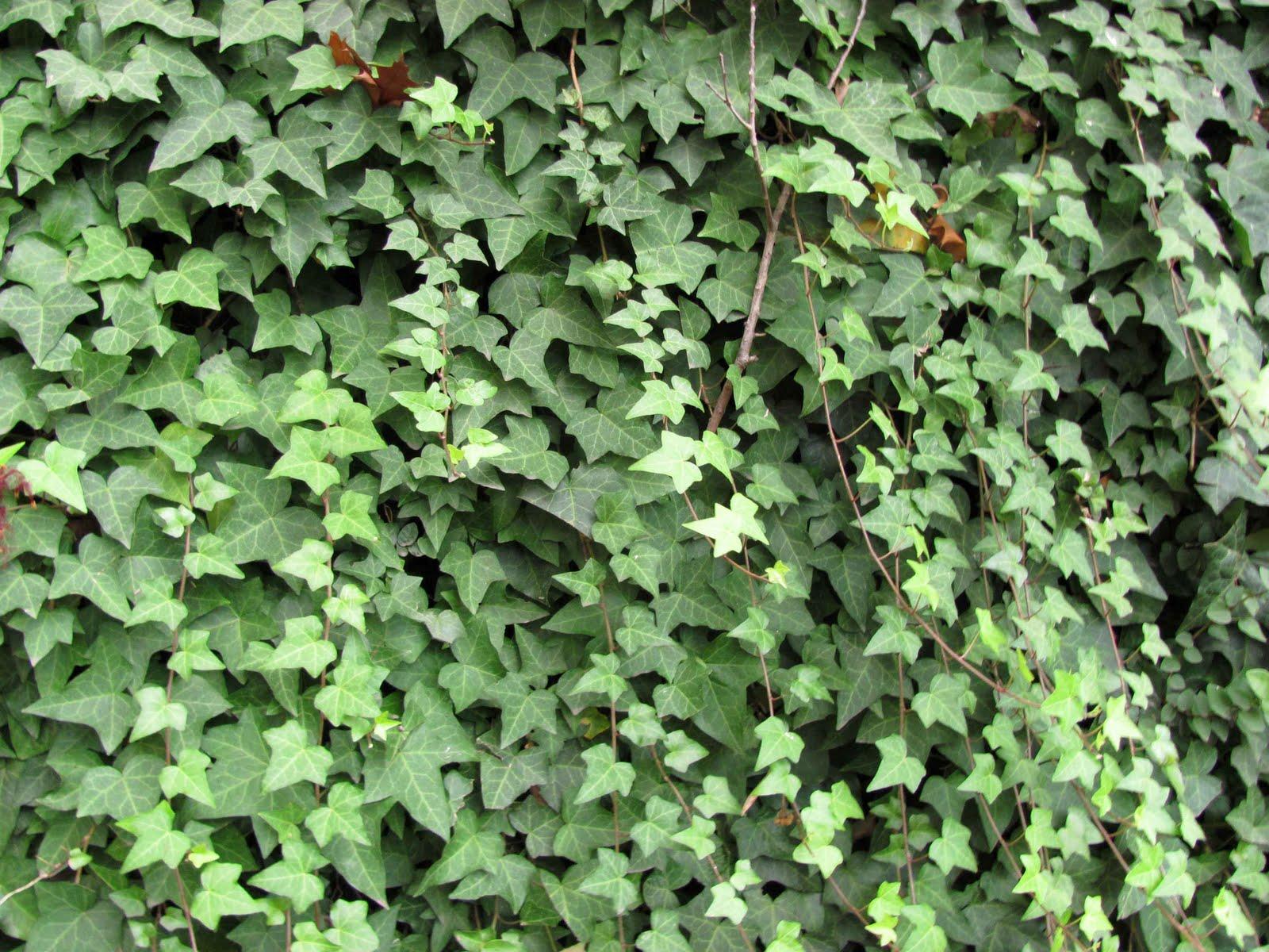 En el jardin: enamorarse del muro y algo más....
