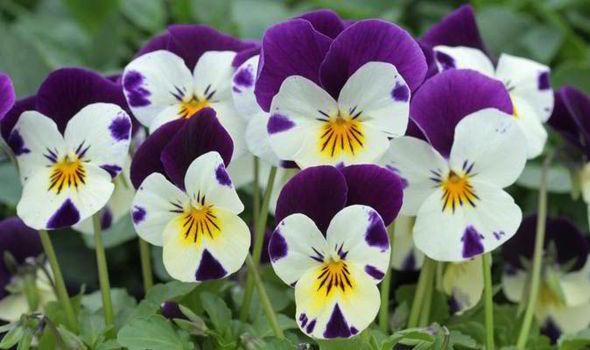 jardins plantas rasteiras:Presente da Natureza para cultivar, decorar, degustar e amarassim