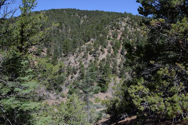 soft hillside of trees