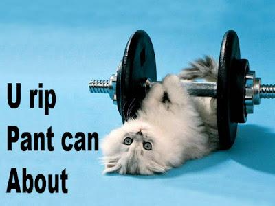 gambar lucu kucing angkat besi