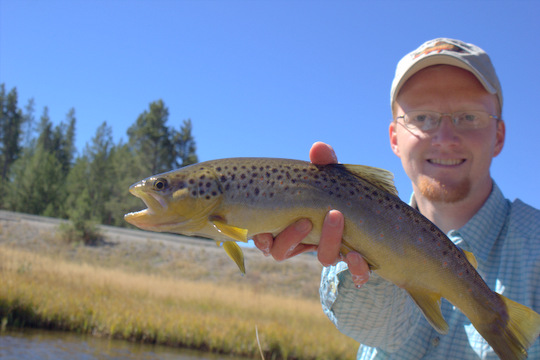 Gibbon River Brown Trout