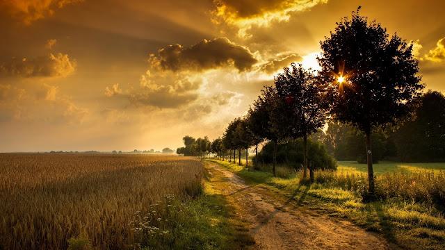 Achtergrond met graan en bomen bij zonsondergang