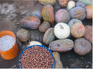 Indigenous Methods of Food and Seeds Preservation