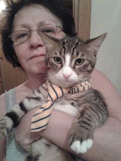 kedi sevgisi