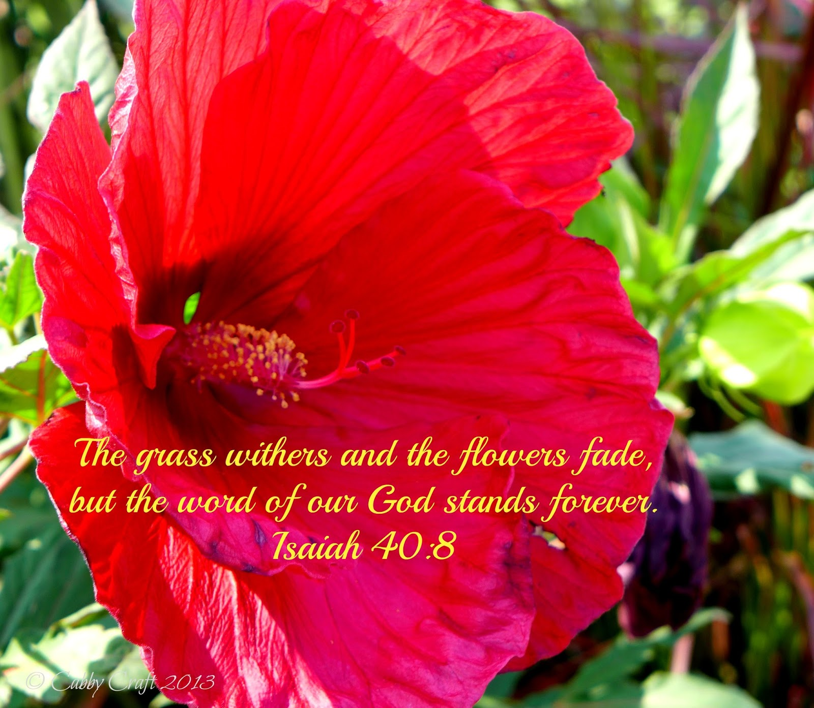 Cabbycraft Bible Verses The Grass Withers And The Flowers Fade