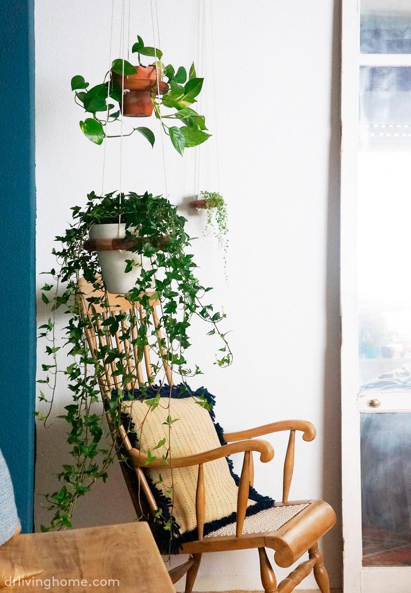 Cómo cuidar plantas