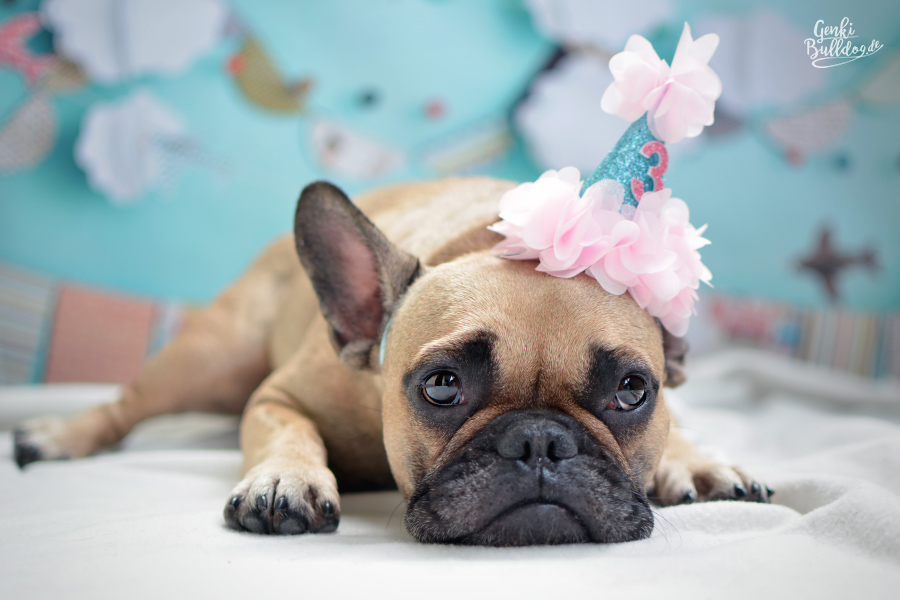 Französische Bulldogge Bully Frenchie Bulldog Geburtstag Happy Birthday