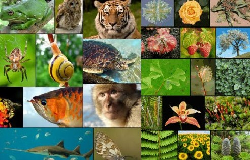 Tujuan Dasar Klasifikasi Makhluk Hidup