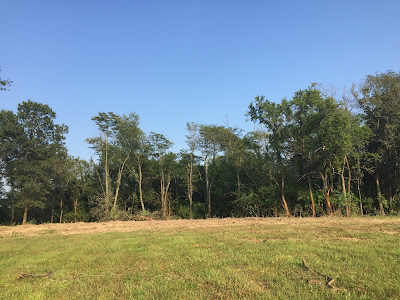 #millsnewhouse Land Cleared