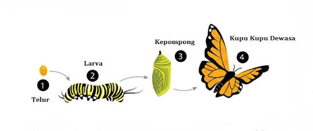 Siklus Hidup Pengertian Dan Jenis