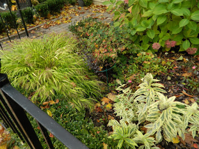 Toronto Cabbagetown garden makeover before by Paul Jung Gardening Services