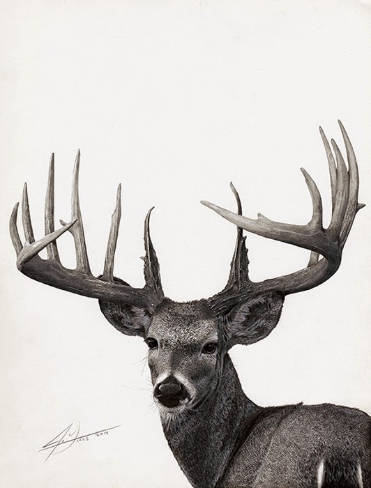12-Trophy-Buck-Julio-Lucas-Experimenting-with-Photo-Realistic-Drawings-www-designstack-co