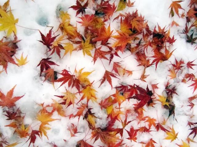 雪の上の紅葉の落ち葉
